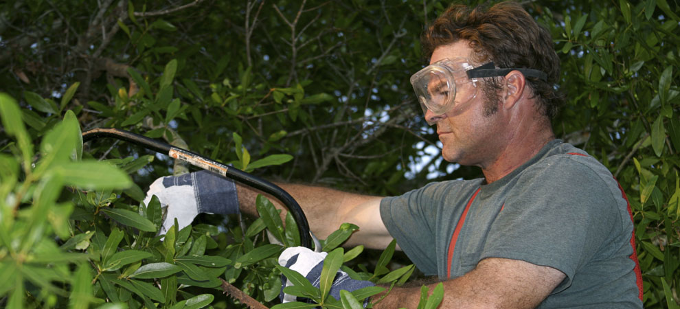 About Big Daves Tree Service