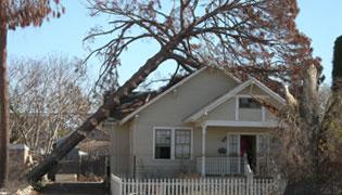 Oak Park Emergency Tree Removal