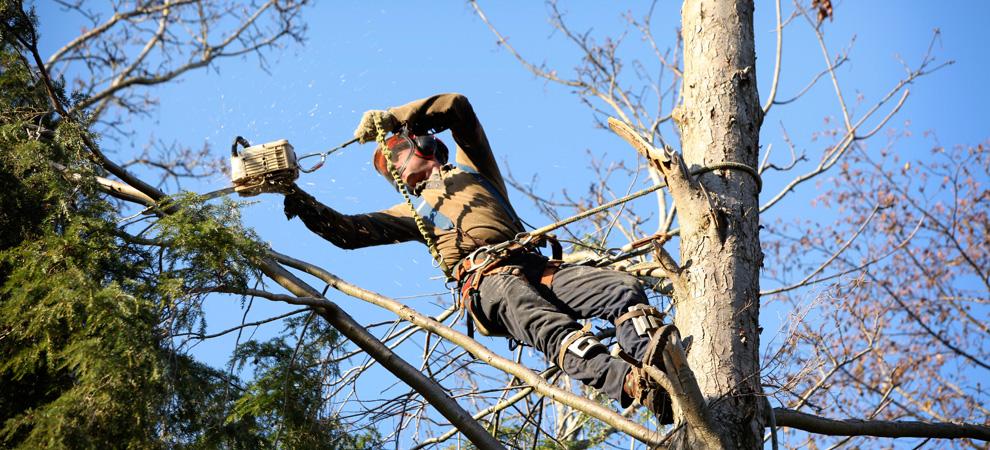 Detroit Tree Pruning