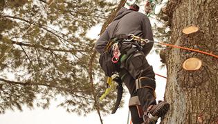 Oak Park Tree Services