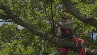 Oak Park Tree Health